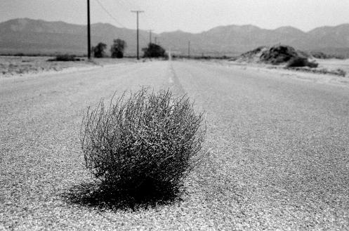 tumbleweed (1)